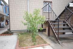 賃貸アパート 外観シナモンの植栽